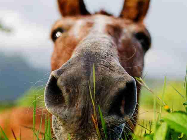A closeup of a horse's head
